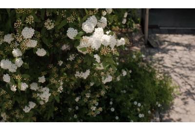 Aleile cu flori vara. Alege un pavaj corespunzător