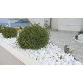 Pietre Decorative Albe Thasos 6-10 cm, Sac 20 kg