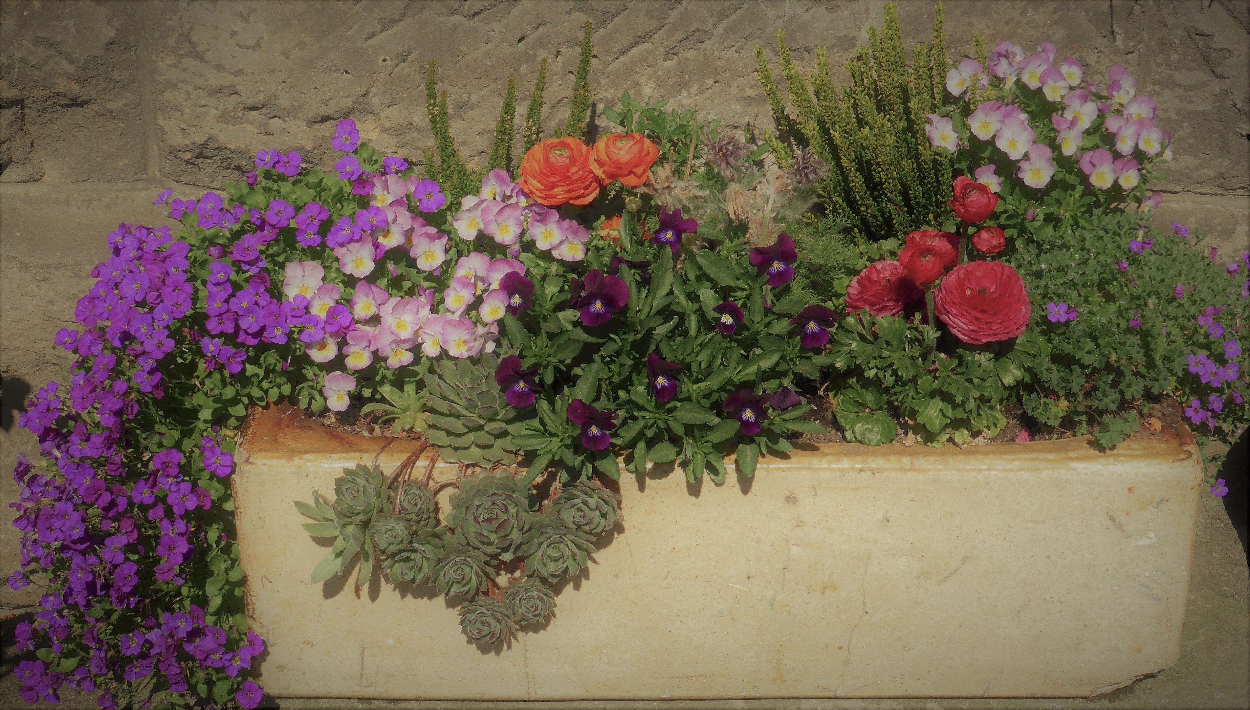 jardiniera5